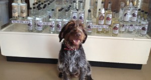 A Trip to the Ugly Dog Distillery
